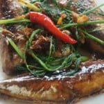 Round scad fish cooked with sauce howto: Thumbnail